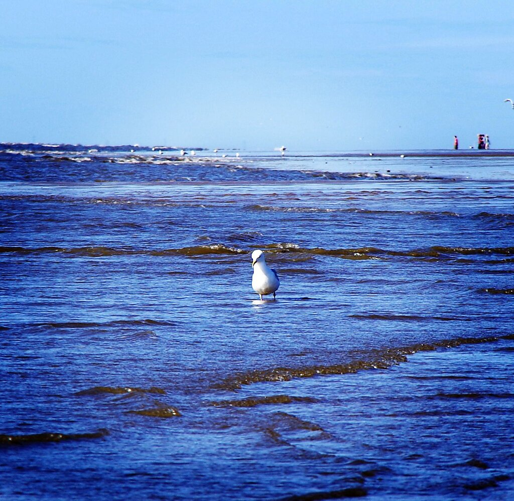 Creative Seagull